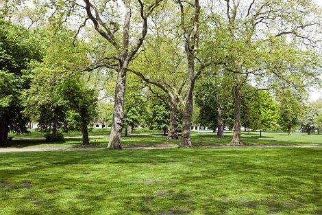 Tree Removal — Spring Lawn in Garden in Sylmar, CA
